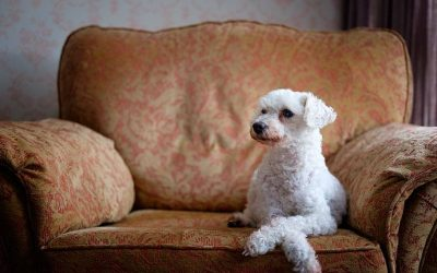 The Best Furniture Fabrics For Your Pets